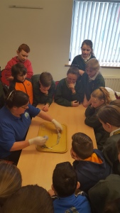 Explorers Workshop- Squid Dissection